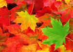 Fall into Autumn - Crafters and Vendors Fair click here for info